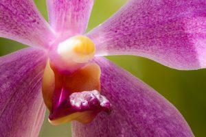 Orchideeenblüte die mittels Focus Stacking im gleichnamigen Fotoworkshop aufgenommen wurde.